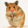 Freddy the Hamster